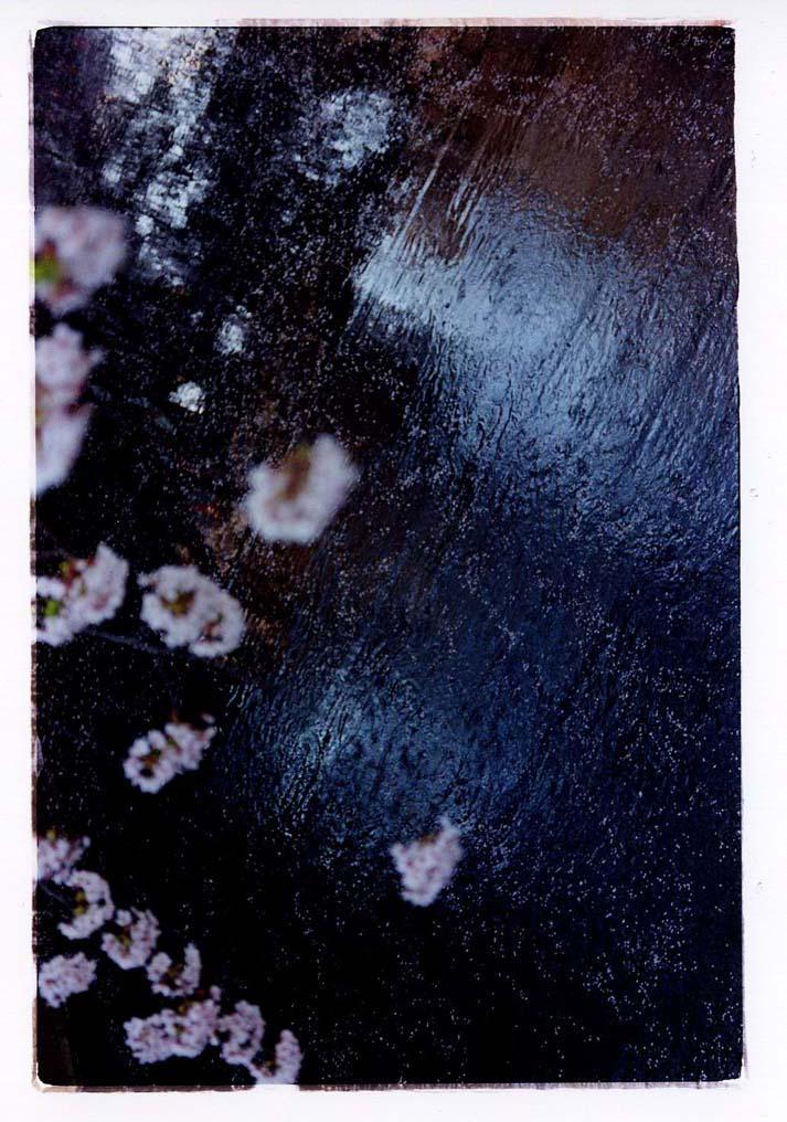 蜷川実花 Mika Ninagawa PLANT A TREE 2011 C-print mounted on plexigras, framed 48.5 x 72.8cm ©mika ninagawa